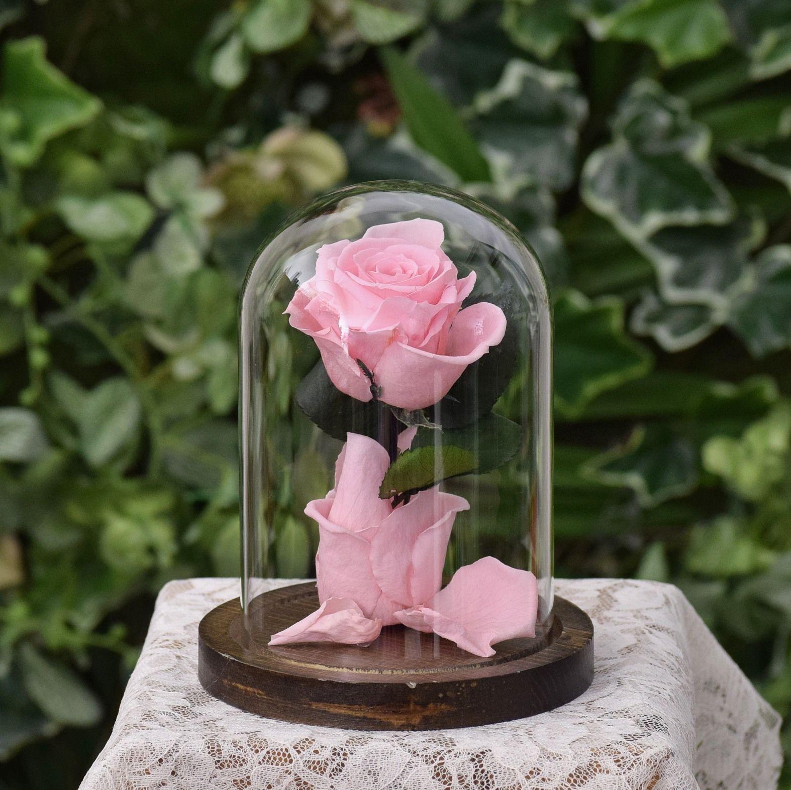 ローズドーム Pink