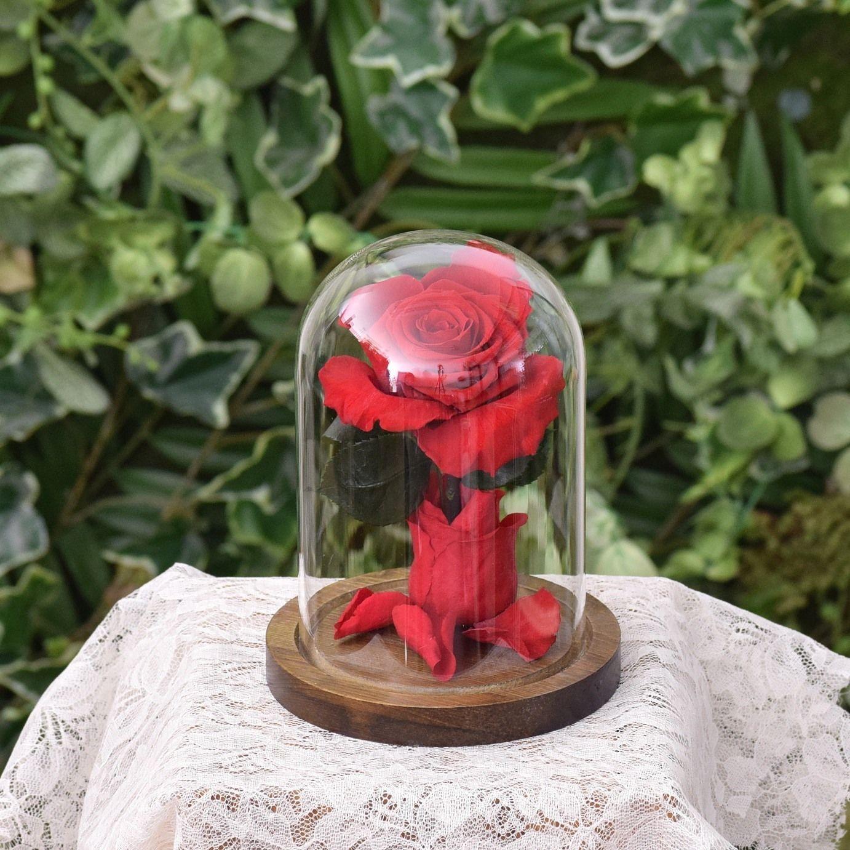 ローズドーム Red