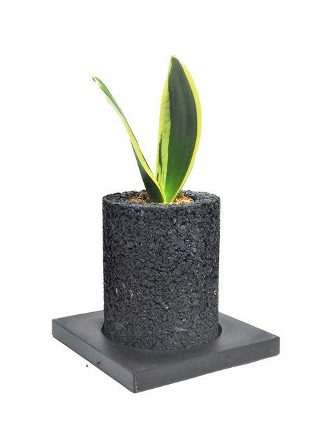 サンスベリア ハニー 空気清浄の木 シリンダー・ミニ