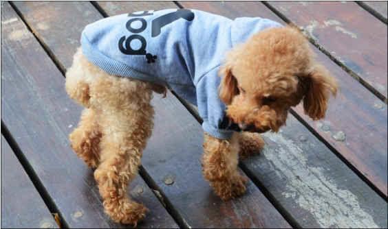 ★超可愛い★人気★犬服★ペット用品 秋冬用 水色