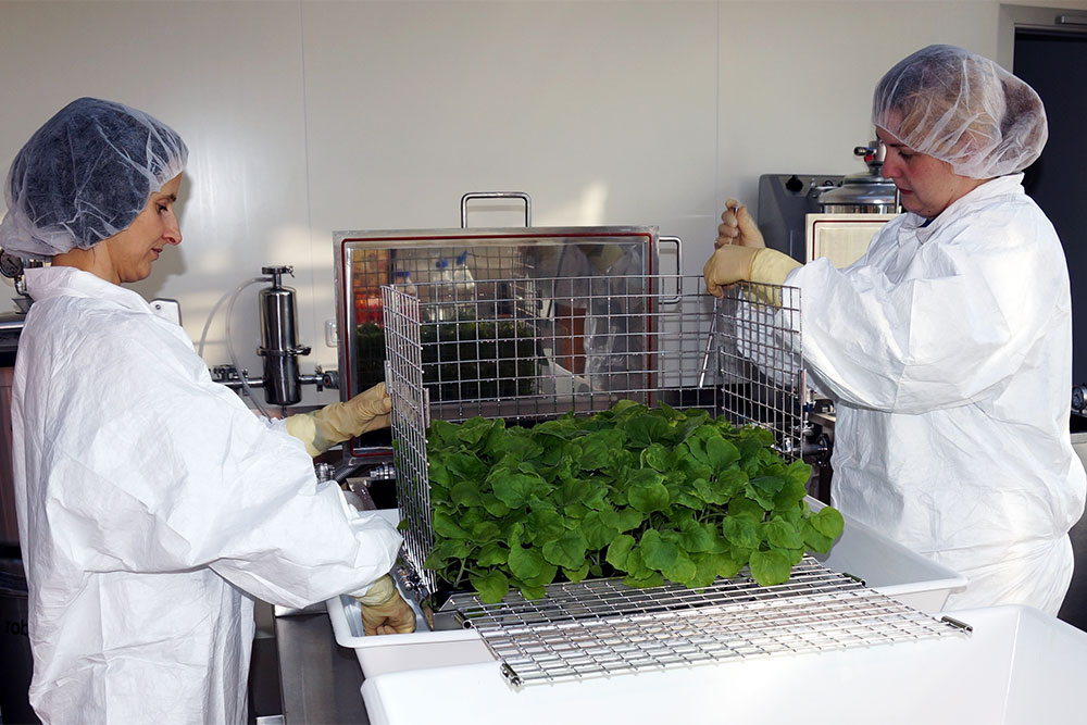 Scene of training on clinical sample development/production