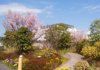 Spring Garden.