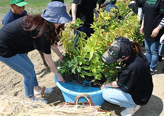 苗木を水につけ植樹の準備