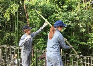 竹の伐採も学生さんが行いました