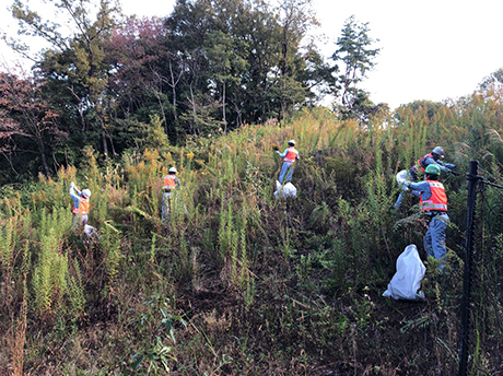 Activity to remove invasive plants