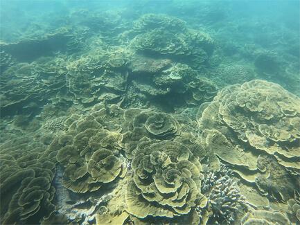 サンゴ礁(豪州)