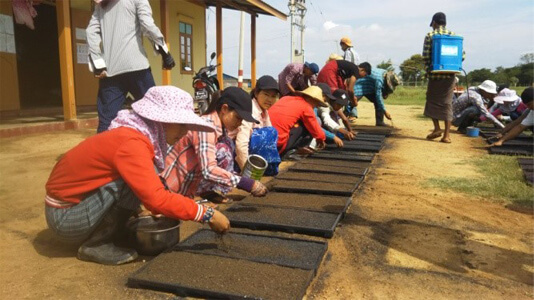 A view of rice-planting training