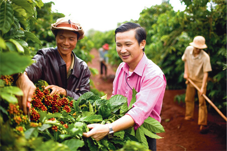 Coffee_Harvesting