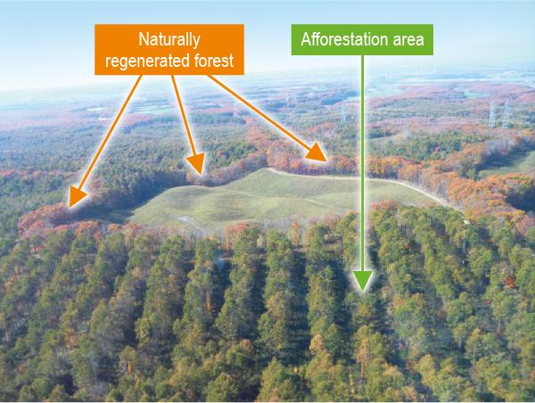 Hayakita Forest