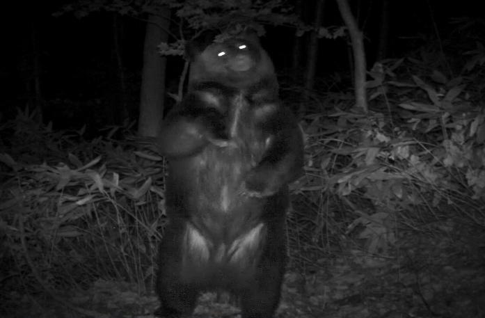 社有林内の定点カメラによって撮影されたヒグマ(札幌市提供)