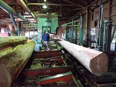 社有林産のスギを製材する様子
