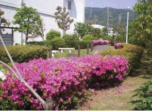 Greening of the Kansai plant