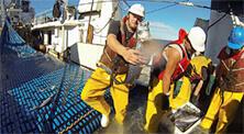PSH (Precision Seafood Harvesting) fishing method