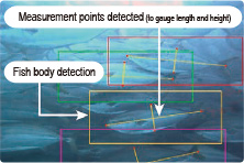 Image showing AI detection of yellowtail