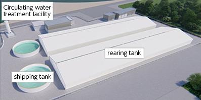 Land-based Recirculation Aquaculture of Chub Mackerel