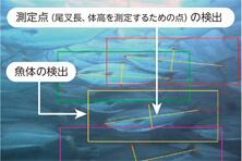 【写真】AIによるブリの魚体検知画面