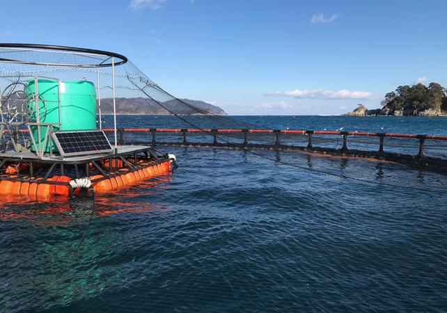 【写真】岩手県大槌町の「アクアリンガル」給餌システム