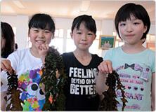 【写真】秋田の海で獲れた海藻です!