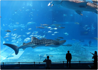 【写真】大水槽「黒潮の海」で、ジンベエザメを見る来館者