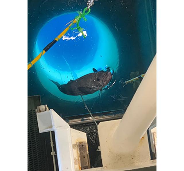 【image】Moon pool in vessel of Australian Longline Pty Ltd.