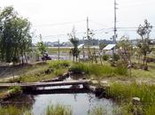 写真:ビオトープ「ぼてじゃこの池」