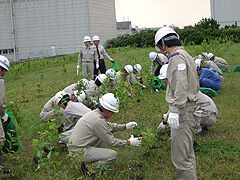 Staff members plant trees at LNG terminal