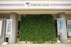Green curtain of Tokyo Gas Kumagaya Building; plants growing on the walls and windows