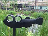 建物の屋上緑化にめだかの池を整備