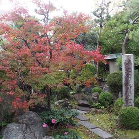 妙行寺の紅葉