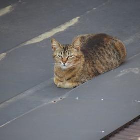 亡き看板猫のニャーちゃん