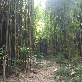 名東区牧野ヶ池竹林