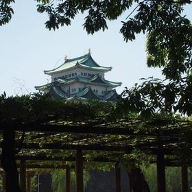 名城公園藤