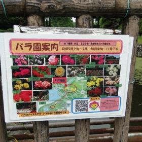 庄内緑地公園のバラ