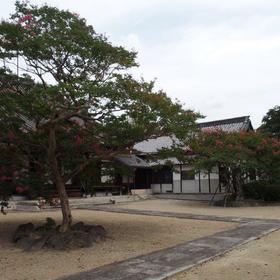 名東区蓮教寺のサルスベリ