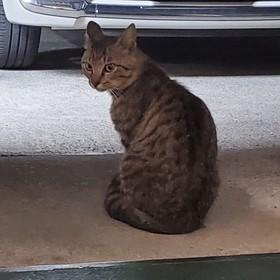 モデルのネコちゃん