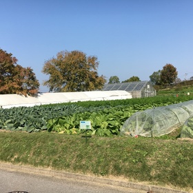 畑一面に美味しそうな野菜!