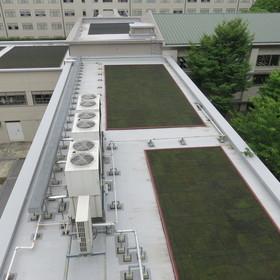 某大学 屋上緑化