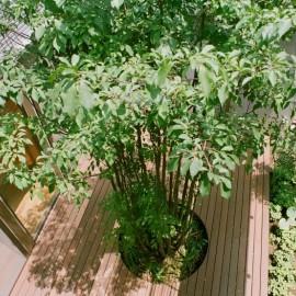 屋上庭園の画像1