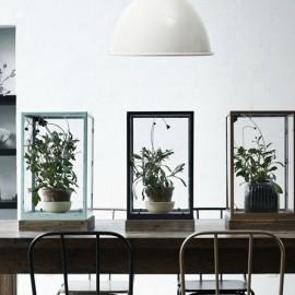 植物の画像3