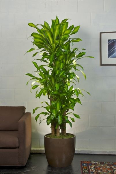 houstoninteriorplants.com
