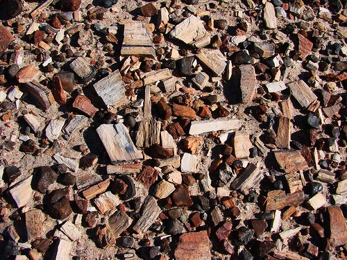 flickr petrified wood gravel