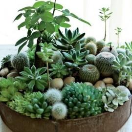 多肉植物の画像2