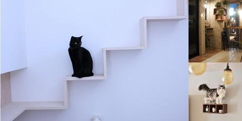 猫と私たちのリノベーション物語