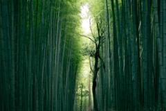 Syaruru - シャルルコラム画像