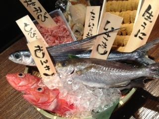 朝獲れの魚が毎日やってくるー!