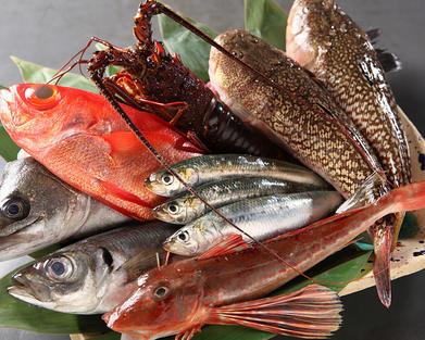 佐島漁港の漁師より直接仕入れる天然の魚介