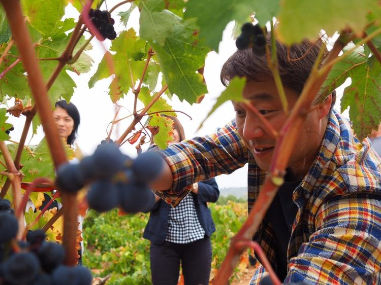 スペインではブドウ狩りもしました