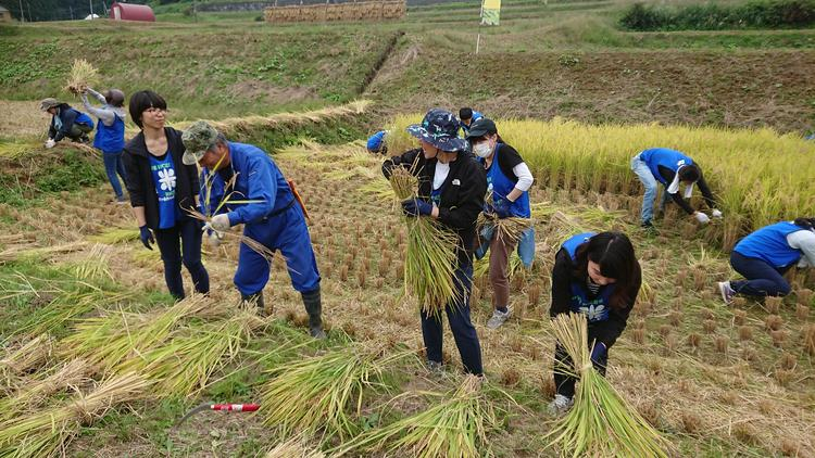 生産者から直接指導で伝統の米作りを習得!