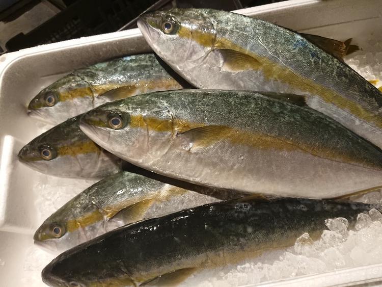 千葉の漁港から直送の鮮魚!