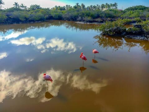 イサベラ島のフラミンゴ